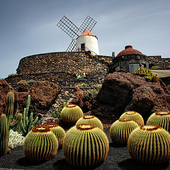 Jardin de Cactus... | LENS MODEL NOT SET <br> Click image for more details, Click <b>X</b> on top right of image to close
