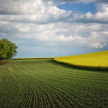 Field Rhapsody... | NIKON 18-105MM F/3.5-5.6G ED-IF AF-S VR DX <br> Click image for more details, Click <b>X</b> on top right of image to close