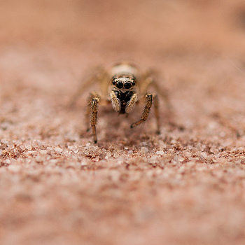 Spider eyes | NIKON 60MM F/2.8D AF MICRO <br> Click image for more details, Click <b>X</b> on top right of image to close