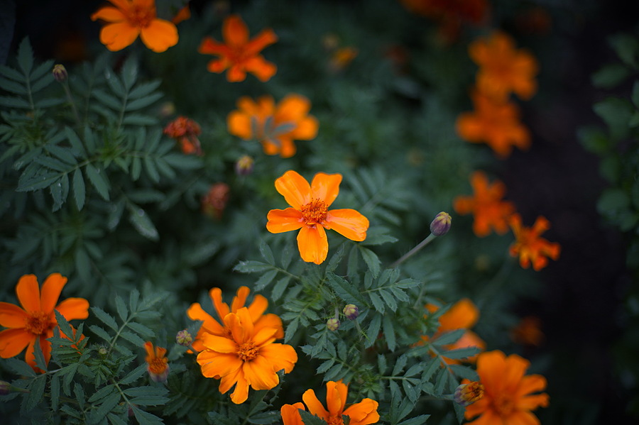 Photo - 102186 | NIKON 50MM F/1.4D AF <br> Click image for more details, Click <b>X</b> on top right of image to close
