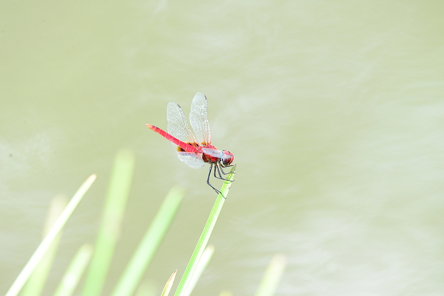Close up of Dragon fly | LENS MODEL NOT SET <br> Click image for more details, Click <b>X</b> on top right of image to close