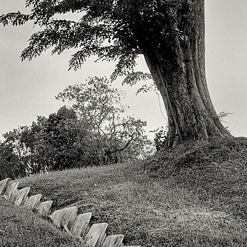 Tree on a hill | NIKON 50MM F/1.4 <br> Click image for more details, Click <b>X</b> on top right of image to close