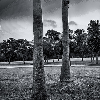Evening at the park | NIKON 50MM F/1.4 <br> Click image for more details, Click <b>X</b> on top right of image to close