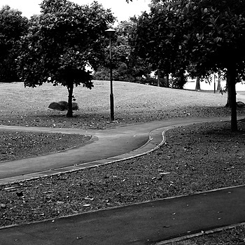 A winding path in the park | NIKON 50MM F/1.4 <br> Click image for more details, Click <b>X</b> on top right of image to close