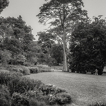 Botanic Garden  | NIKON 50MM F/1.4 <br> Click image for more details, Click <b>X</b> on top right of image to close
