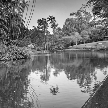 A quiet moment at the Botanic Garden