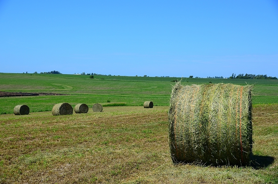 Hay Bales in Iowa Field | LENS MODEL NOT SET <br> Click image for more details, Click <b>X</b> on top right of image to close