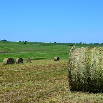 Hay Bales in Iowa Field | LENS MODEL NOT SET
