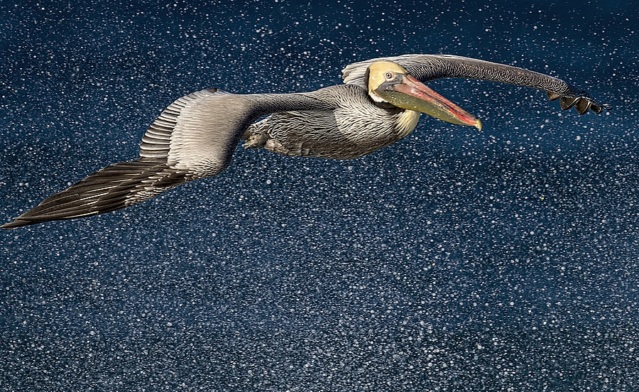 Brown Pelican in Surf's Spray | NIKON 500MM F/4G ED-IF AF-S VR N <br> Click image for more details, Click <b>X</b> on top right of image to close