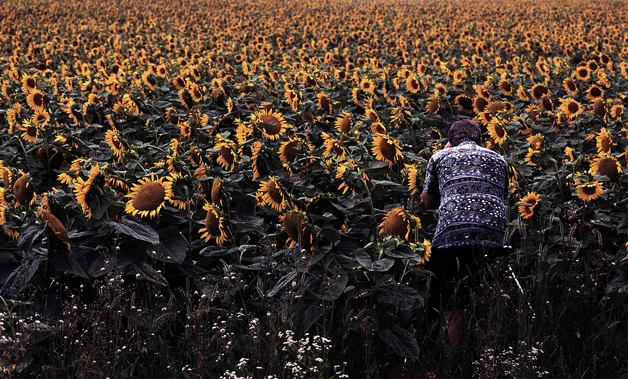 Robert among the Sunflowers | TOKINA 80-200MM F2.8 <br> Click image for more details, Click <b>X</b> on top right of image to close
