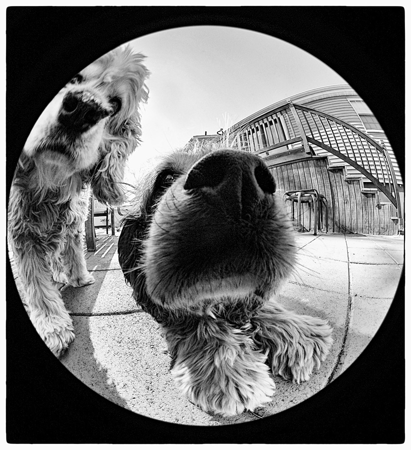 By A Nose! | NIKON 8MM F/2.8 CIRCULAR FISHEYE <br> Click image for more details, Click <b>X</b> on top right of image to close