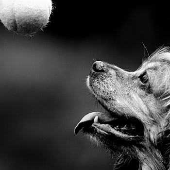 Snoops Ball! | NIKON 200MM F/2.0G ED-IF AF-S VR <br> Click image for more details, Click <b>X</b> on top right of image to close
