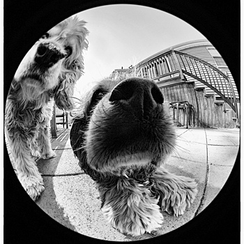 By A Nose! | NIKON 8MM F/2.8 CIRCULAR FISHEYE