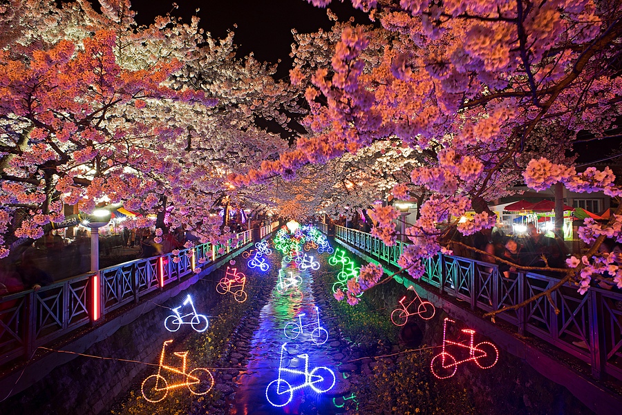 Yeojwacheon Stream Cherry Blossoms At Night | NIKON 20MM F/2.8 <br> Click image for more details, Click <b>X</b> on top right of image to close
