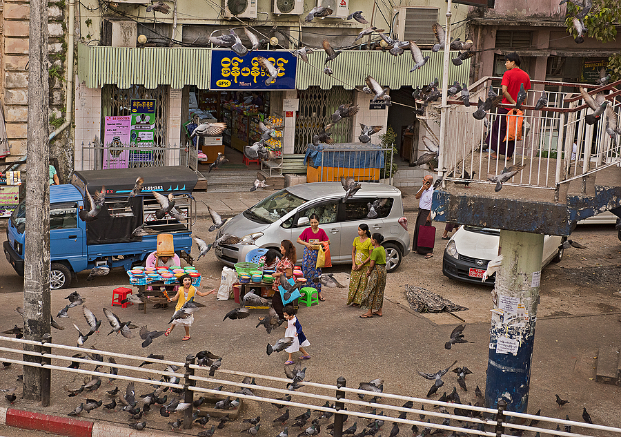 Yangon Street Pigeons | NIKON 24-70MM F/2.8G ED AF-S N <br> Click image for more details, Click <b>X</b> on top right of image to close