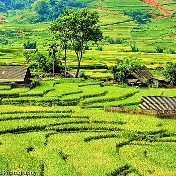 Photo: Ultra Green Sapa North Vietnam
