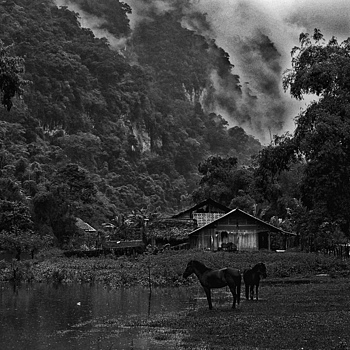 Horses and Mist Ba-Be National Park Northern Vietnam | NIKON 50MM F/1.8 AF <br> Click image for more details, Click <b>X</b> on top right of image to close