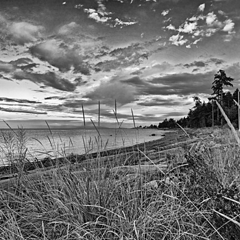 Straw Beachscape | NIKON 20MM F/2.8 <br> Click image for more details, Click <b>X</b> on top right of image to close